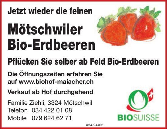Biohof Maiacher, Mötschwil - Jetzt wieder die feinen Mötschwiler Bio-Erdbeeren
