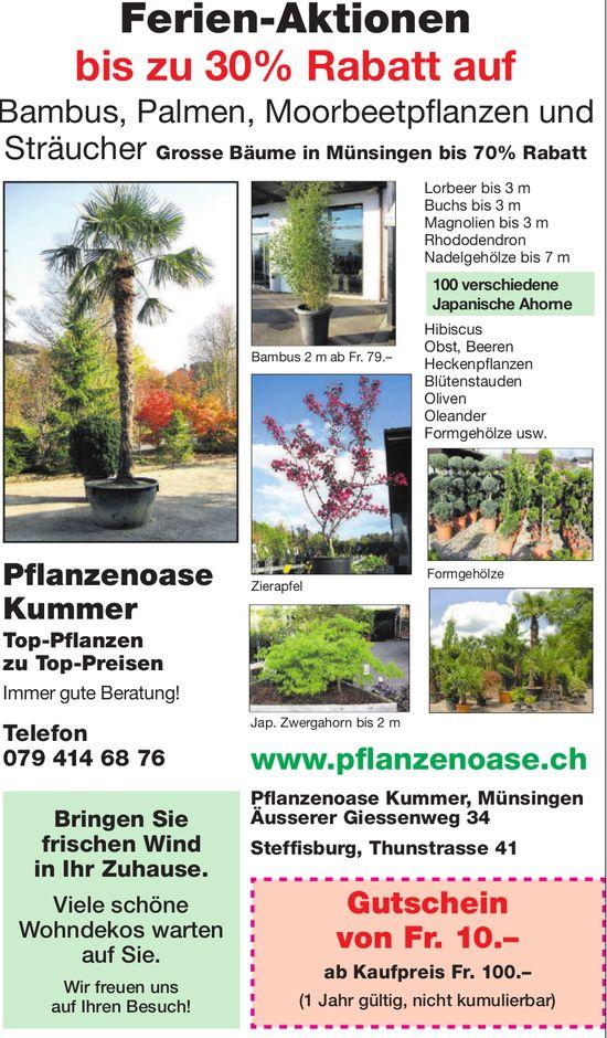 Ferien-Aktionen - Pflanzenoase Kummer
