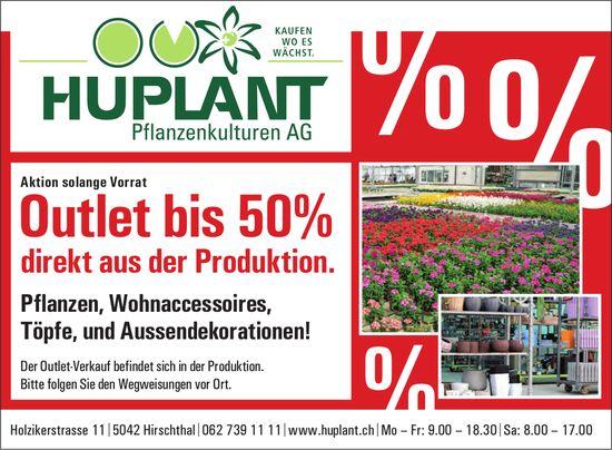 Huplant Pflanzenkulturen AG, Hirschthal - Outlet bis 50% direkt aus der Produktion.