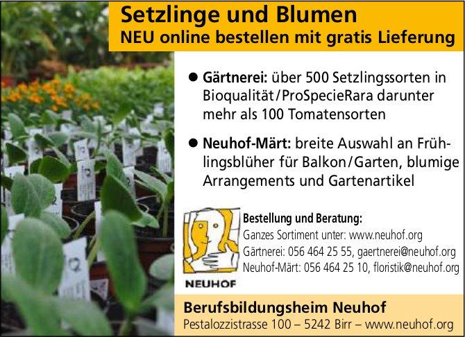 Berufsbildungsheim Neuhof - Setzlinge und Blumen: NEU online bestellen mit gratis Lieferung
