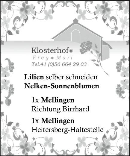 Klosterhof, Muri - Lilien selber schneiden, Nelken-Sonnenblumen