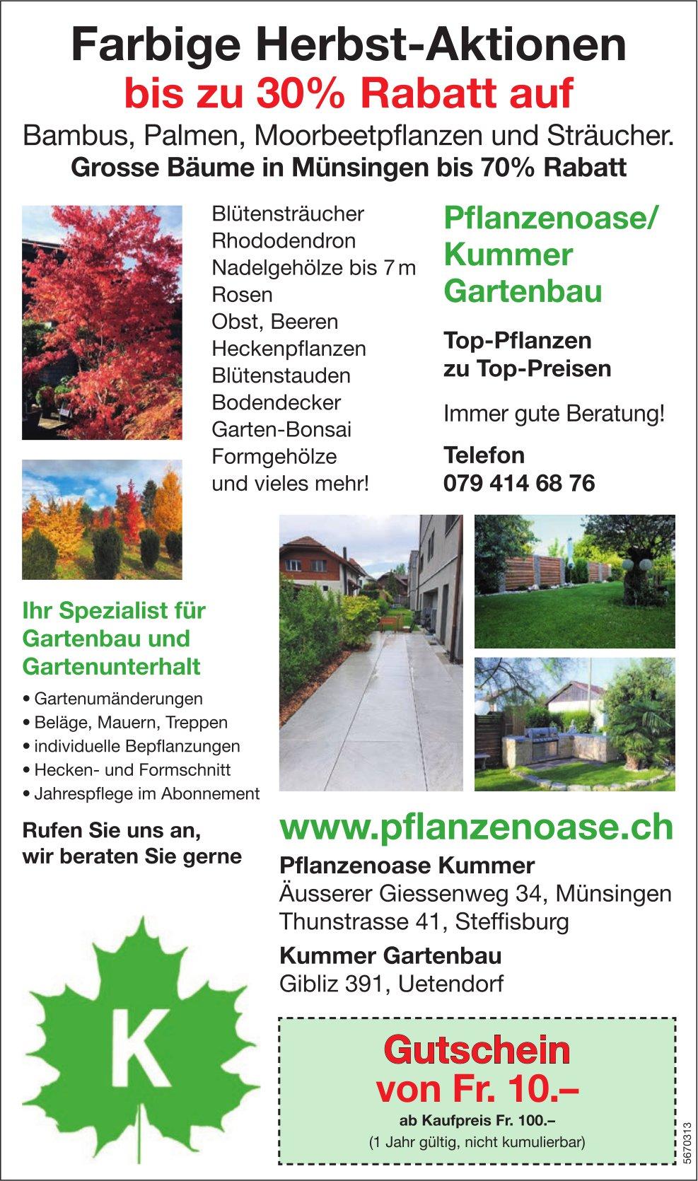 Pflanzenoase Kummer, Münsingen, Steffisburg & Uetendorf - Farbige Herbst-Aktionen bis zu 30% Rabatt...