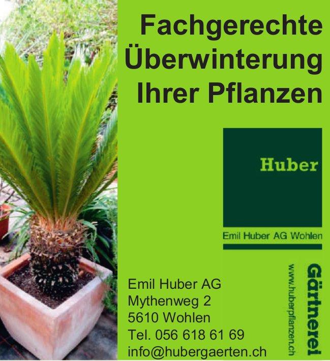 Gärtnerei Emil Huber AG Wohlen - Fachgerechte Überwintertung Ihrer Pflanzen